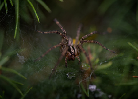 Spider on Its Web