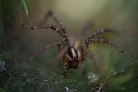 close up: Spider Close Up Stock Photo