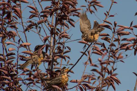 Birds Between the Branches