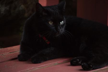 levantandose: Gato negro que se levanta Foto de archivo