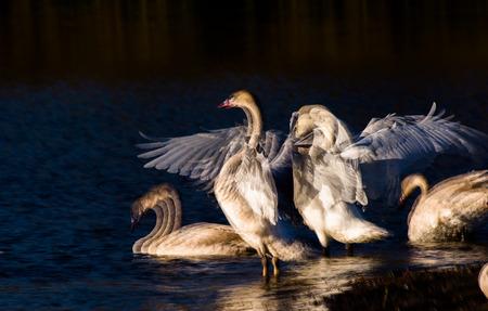 長時間露光鳥の群れ