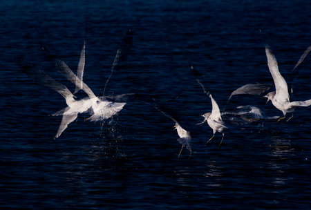 Long Exposure Flying Birds