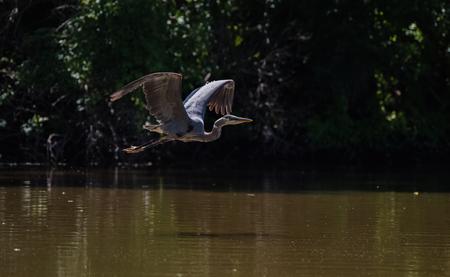 Bird Flying Over Water Фото со стока
