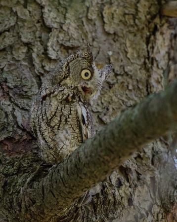 Owl Atop a Branch