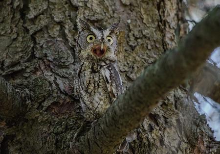 Owl Perched on a Branch Reklamní fotografie