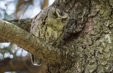 Owl Resting on a Branch