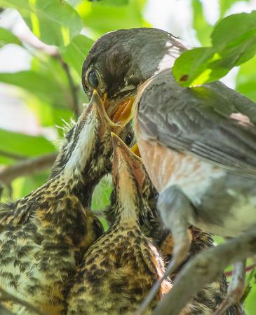 Bird Feeding Its Hatchlings