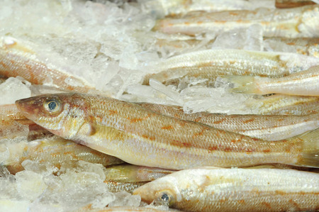 Eastern School Whiting fish at fish market in Sydney, New South Wales, Australia