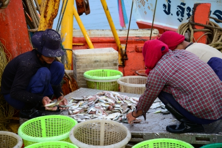 commercial fisheries: Prachuap Khiri Khan, Thailand - November 11, 2012  Fishermen inspect and convey to fish market in Prachuap Khiri Khan  Prachuap Khiri Khan is a coastal province where fishing industry is well-known