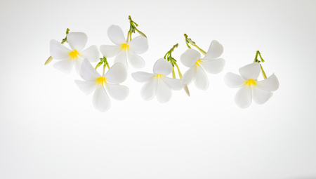 Many blooming white flowers on a white background. Stock Photo