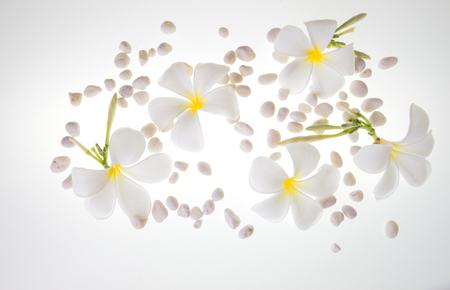 Pure white Of many flowers And white stones on white floor
