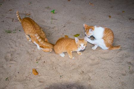 Three cats are together on the sand, the gestures of each are different. Banque d'images