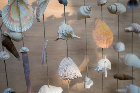 Many types of sea shells are combined to bring a beautiful decoration. 写真素材