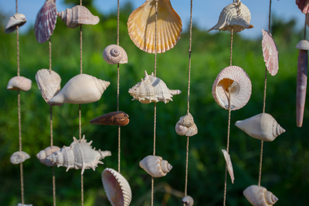 Many types of sea shells are combined into a beautiful decoration.