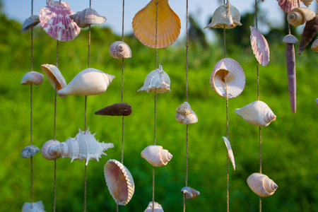 Many types of sea shells are combined together to bring a beautiful decoration.