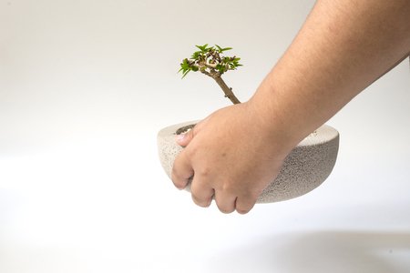 Hand holding a tree showing the gesture on a white background.