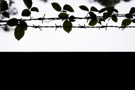 Black silhouette, barbed wire with tree trunks and branches. 版權商用圖片