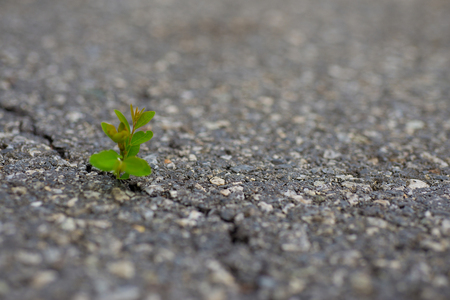 A small tree formed at the crevice on a concrete road surface. Stock Photo