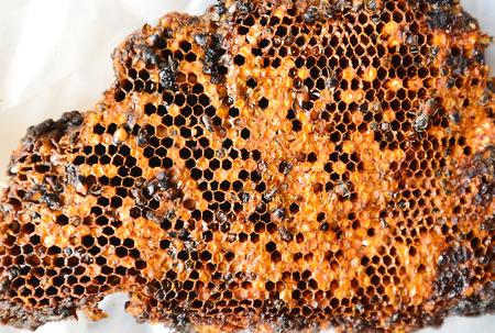 Fresh honeycomb lay on white ground.