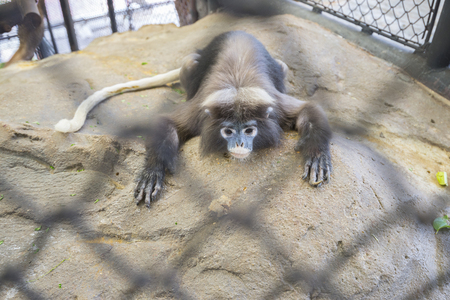 The monkeys looked so sick that they were trapped in the cage. Banco de Imagens - 100829366