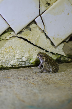 Toad is a calm posture on a concrete floor.