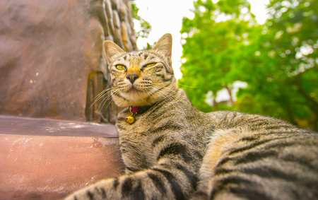 Cat breeds of Asian appearance, mannerisms. Stock Photo