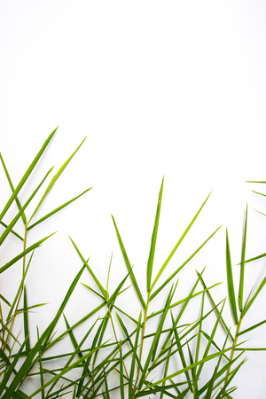 Bamboo leaves on a white background Banco de Imagens