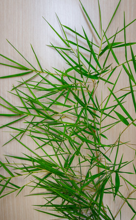 Bamboo leaves on wooden boards background Banco de Imagens