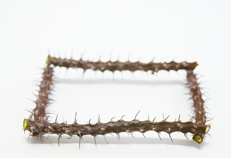 The spines of the branches are arranged in a frame on a white background. Stock Photo