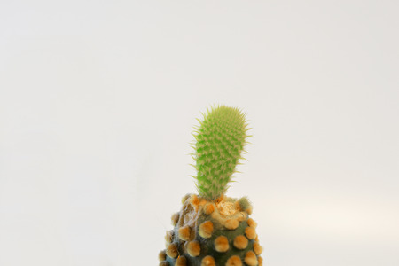 The sprouting of a cactus.