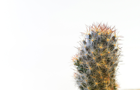 Spines of cactus, spines of desert plants