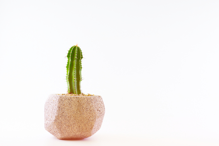 Cactus in a concrete pot on a white background. Stock Photo