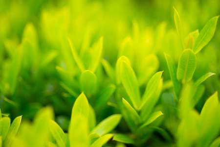 The leaf is a young, bright green leaves. Stock Photo