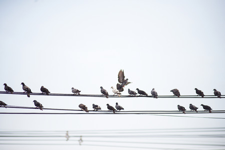Many birds gather on dangerous high-voltage lines. Stock Photo