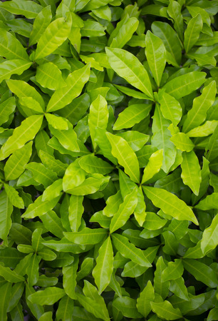 Top view, green leaves, dense green lush.