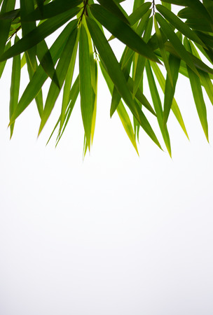 The leaves are green bamboo leaves arranged on white space with empty space.