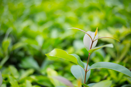 Leaves sprout dense trees and lush.