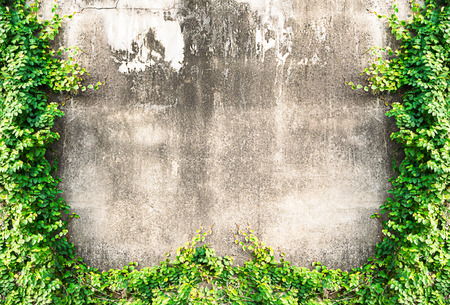 ivy wall: Grunge wall background with ivy