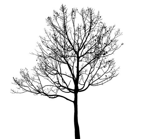 Dead Tree Silhouette Isolatedon white background Banco de Imagens