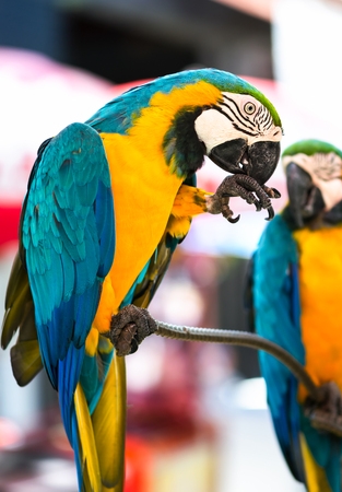 Colorful macaws parrot in the zoo