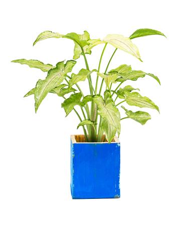 House plant isolated on white background Banco de Imagens