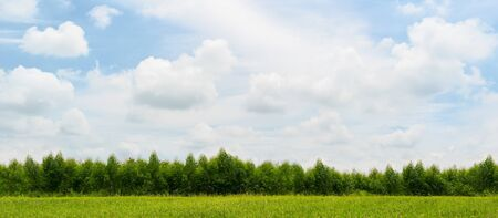Sky and clouds over and green forest landscape Banco de Imagens