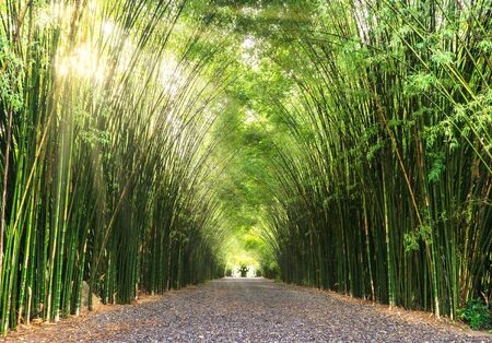 Road through bamboo forest and sunlight Banco de Imagens