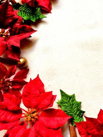 red poinnsettia  写真素材