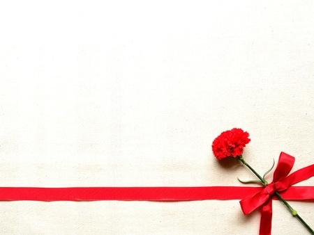 リボンと赤のカーネーション 写真素材