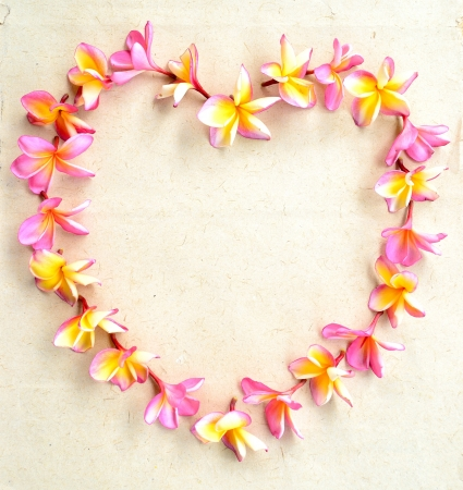 Heart shape of pink plumeria Stock Photo - 14419131