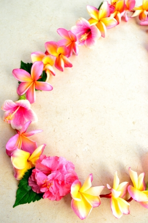 Pink plumeria lei Stock Photo - 14419133