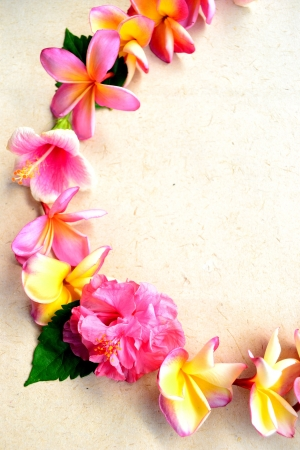 Pink plumeria lei Stock Photo - 14419134