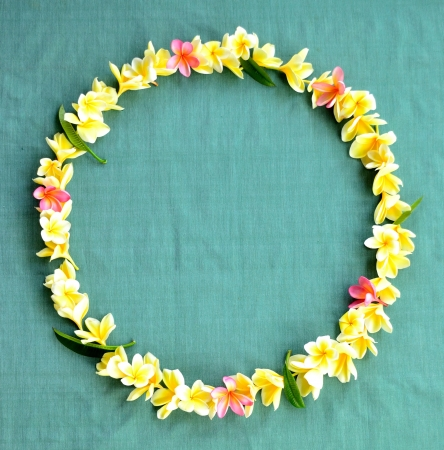 Frame of plumeria lei blue background photo