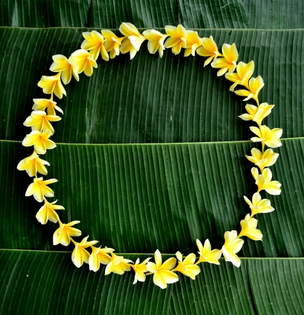 Yellow plumeria lei on banana leaf photo